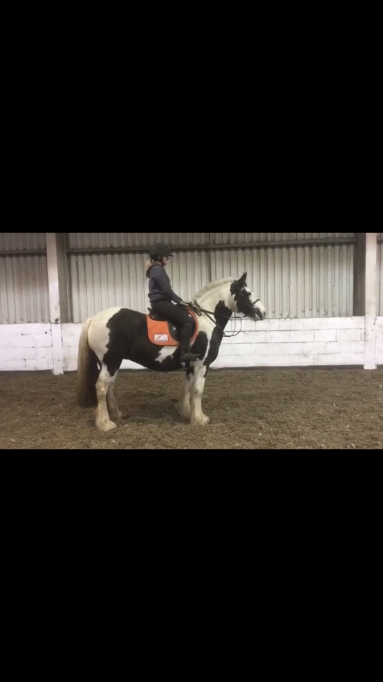 Current Carriage Driving 4 Sale, Horses for sale, ponies for sale